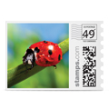 ladybug in spring photo stamp
