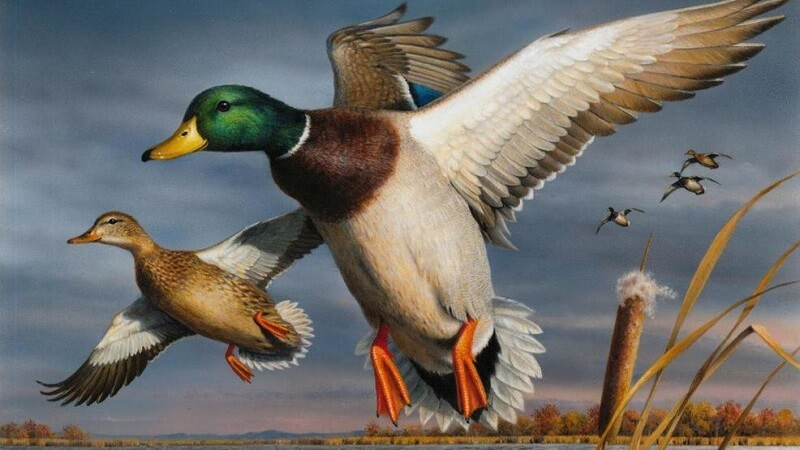 image for the 2018-2019 federal duck stamp